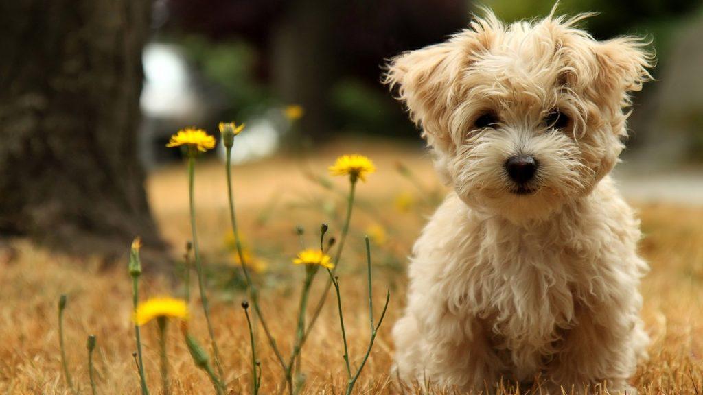 dogs teach responsibility